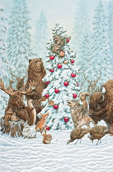 Wildlife Christmas Cards.Wilderness Welcome Wildlife Boxed Christmas Cards